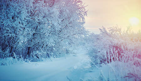 Beautiful Christmas landscape, Against the sunset sky,  Snow covered tree branches Stok Fotoğraf