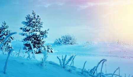 Beautiful Christmas landscapeб winter landscape with the pine forest seaside dunes