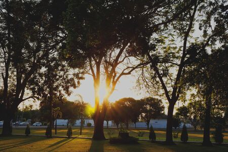 denver skyline at sunrise: Sunset light  through the trees in the park