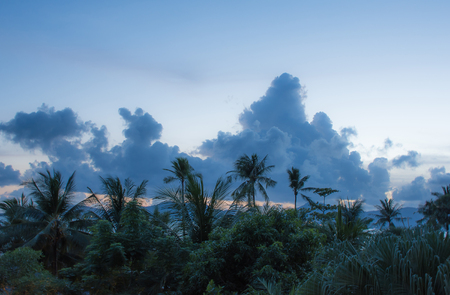 cloud formations: Beautiful scenery of amazing cloud formations on sunset sky with palm trees before dark