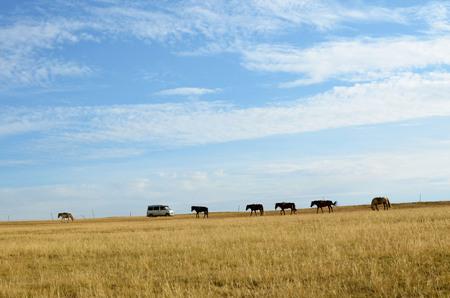mongolia horse: Autumn steppe