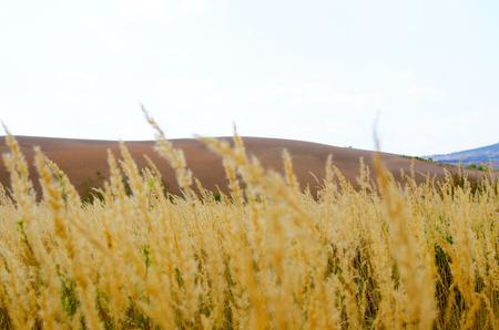 bacillus: Autumn desert Stock Photo