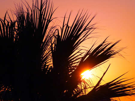 The palm leaves in the sunset Stock Photo - 10780655