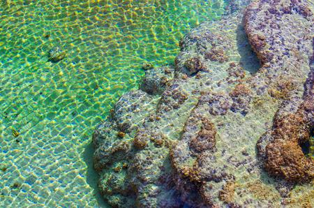 mundo contaminado: Cierre de aceite, algas y l�quenes en el agua contaminada. Vista superior tiro.