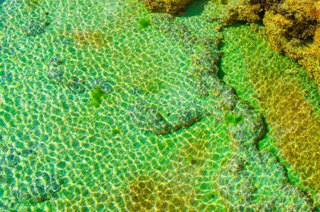 mundo contaminado: Cierre de aceite, algas y líquenes en el agua contaminada. Vista superior tiro.