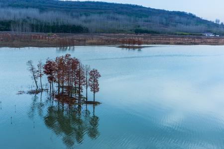sequoia: panoramic view of river in natural park of Xuyu,Jiangsu province,China.