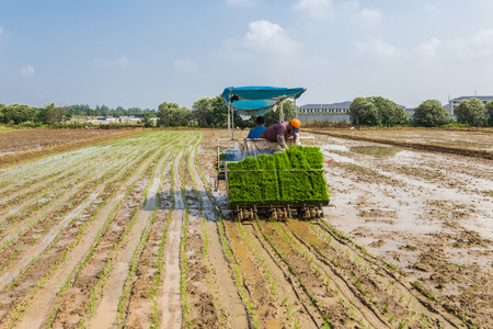 rice transplanting with machine, agriculture concepts. Stock fotó - 83241239