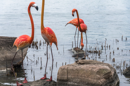 several flamingos standing on lake
