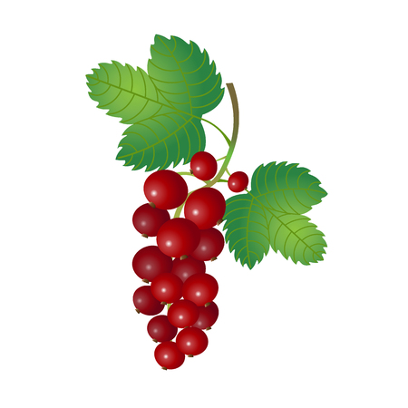 currant: Red currant. Berries currant with leaves. Bunch. Illustration
