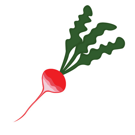 Abstract cartoon radish with green leaves