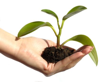 hand holding a plant Stock Photo - 860928
