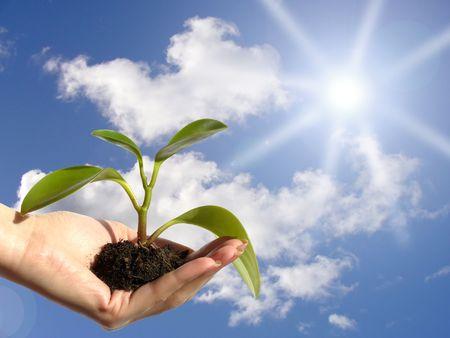 Planta se encuentra bajo el sol
