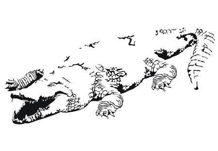 bask: Crocodile
