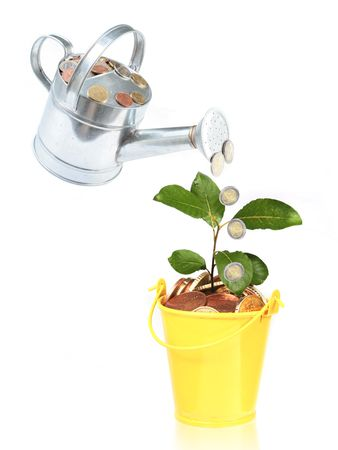 Watering full of money. Plant growing from bucket full of coins.