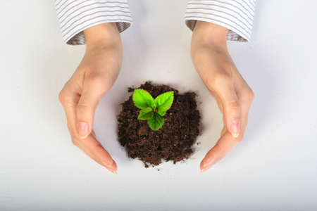 seeding: Small plant in hands. Isolated over white.