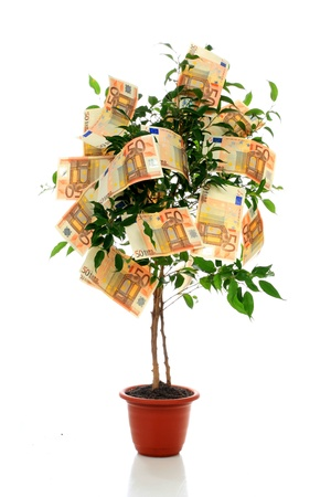 dinero euros: �rbol de dinero. Foto de archivo