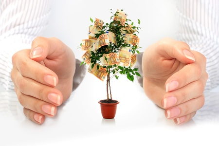 commercial tree care: Money tree. Stock Photo