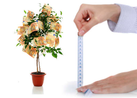 Money tree. Stock Photo - 8703721