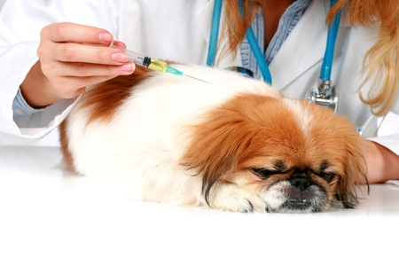 Dog Healthcare: vaccination. Isolated over white background.