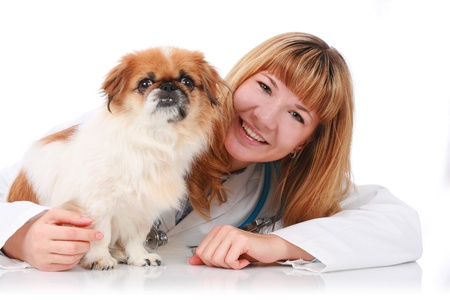 Vet and little dog isolated over white background. photo