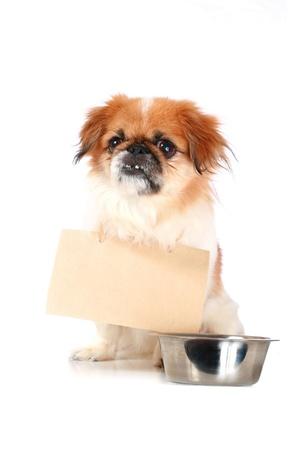 Little dog and cardboard.