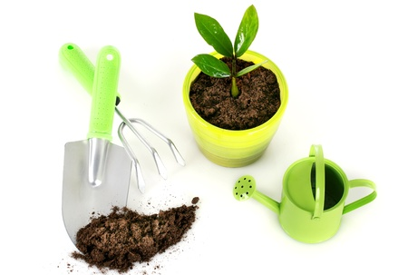 Plant with garden tools isolated over white background. Standard-Bild