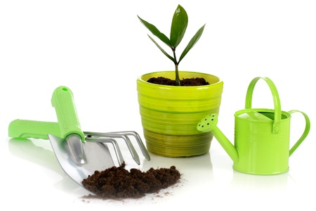 shovel in dirt: Plant with garden tools isolated over white background. Stock Photo