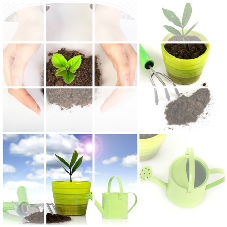 Collage. Plant with garden tools isolated over white background. Archivio Fotografico