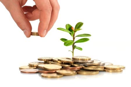 ganancias: El dinero y la planta aislado más de blanco.