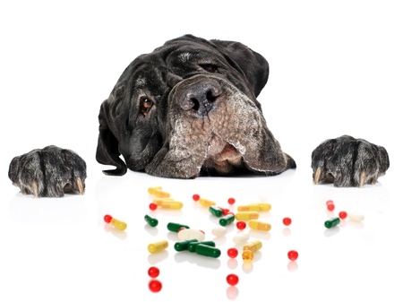 Dog and pills isolated over white.