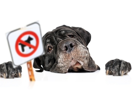 black giant: Dog and no pets sign isolated over white  Stock Photo