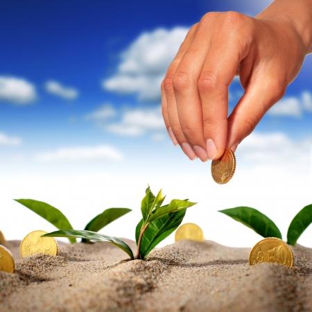 mano con dinero: Planta y dinero en la arena.