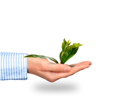 secure growth: Plant in hand.