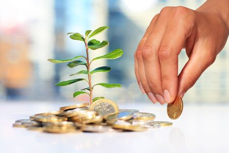 plant seed: Successful investment. Plant and coins on table. Stock Photo
