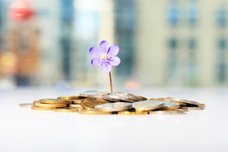 Erfolgreiche Investitionen. Blume und Münzen auf dem Tisch. Standard-Bild - 58203603