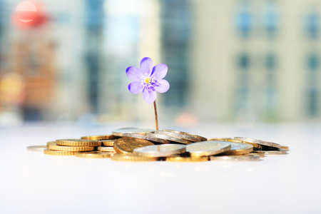 Successful investment. Flower and coins on table.
