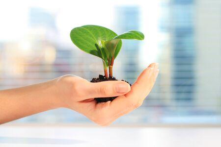 Plant in hand Standard-Bild - 70437926