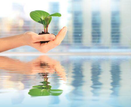Plant in hand Standard-Bild - 71255140