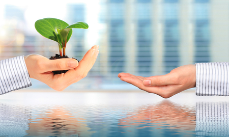 Plant. New life concept. Banque d'images