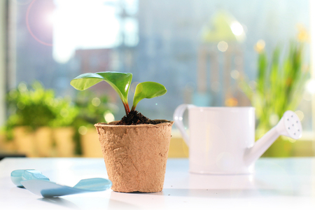 peat pot: Garden tools and small plant Stock Photo