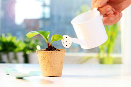 Gartengeräte und kleine Pflanze Standard-Bild - 74540629