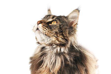 Cat is looking up Standard-Bild