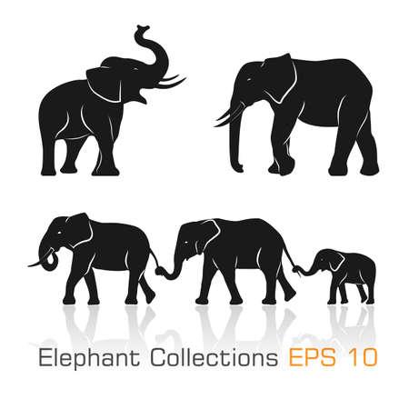 siluetas de elefantes: Conjunto de elefantes blancos negros en diferentes poses ilustración vectorial- Vectores