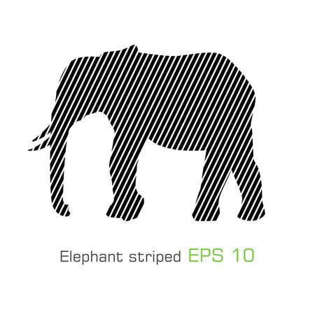 The striped elephant - Vector illustration 矢量图像
