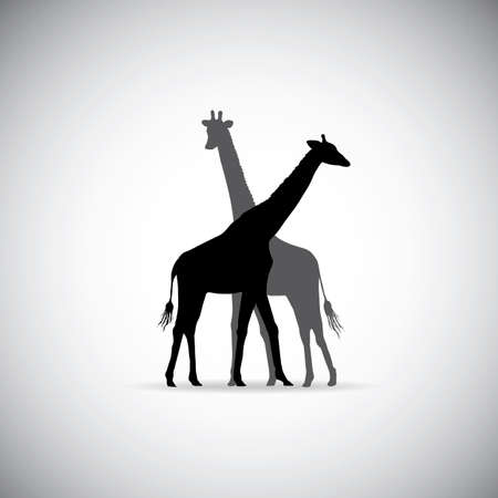 two animals: silhouette of Giraffe couple