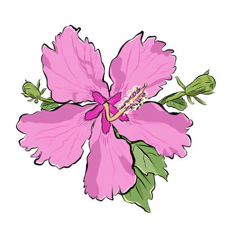 Pink flower with buds. Realistic view with ink strokes