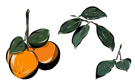 Orange with leaves and branches. Hand Drawn Vector Illustration.