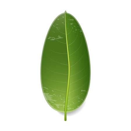 熱帯の葉。白で隔離されています。グラデーションを使用したベクターイラスト。 写真素材 - 109668920