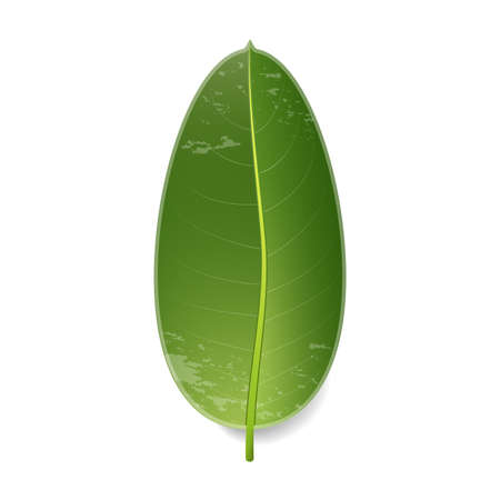 Tropical leaf. Isolated on white. Vector illustration with gradient.