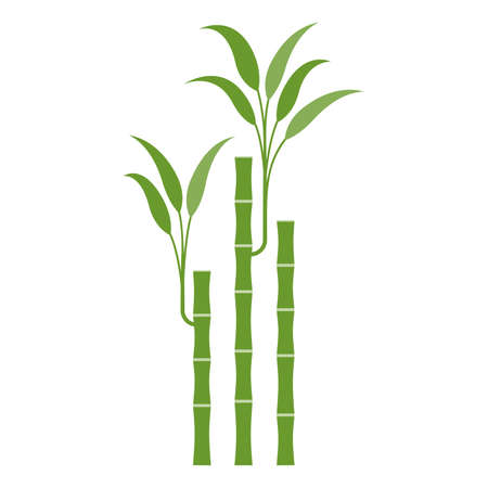 Lucky bamboo. Isolated on white. Vector flat illustration.